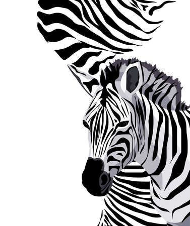 Background illustration with a zebra Vector