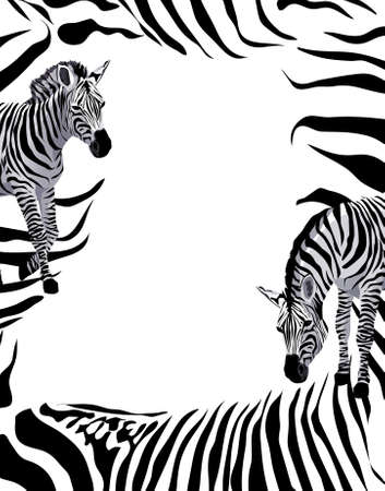 Background illustration with zebras   Vector