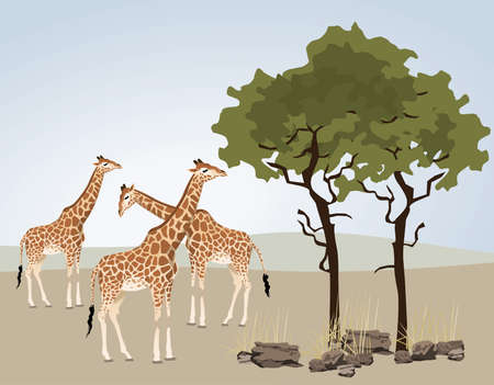 Giraffe illustration with wild landscape of Africa Vector