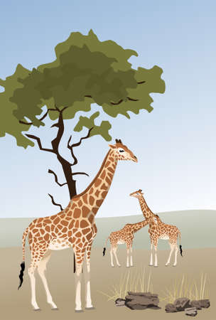 Illustration of giraffes in savannah Stock Vector - 7106170