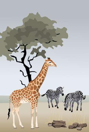 hoog gras: Giraffe illustratie met het wilde landschap van Afrika