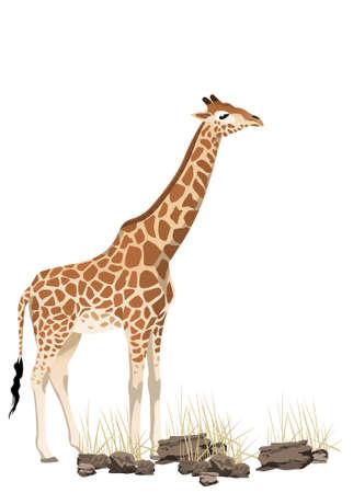 Abstract giraffe illustration with rocks and bush Stock Vector - 7030653