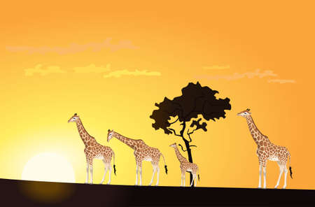 Illustration of two giraffes in the sunset Vector