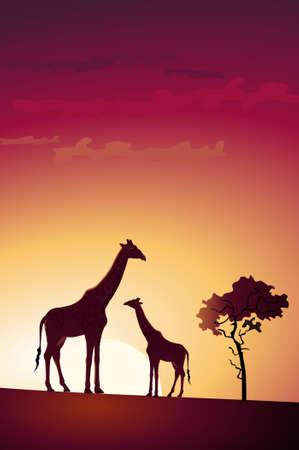 giraffe silhouette: Illustration of two giraffes in the sunset