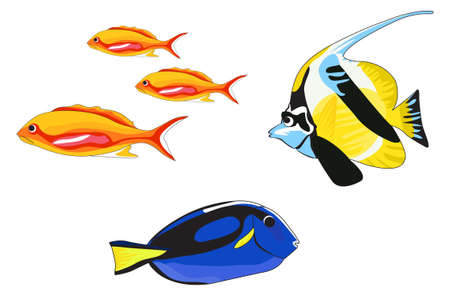 Tropical fish illustrations isolated on white background Vector