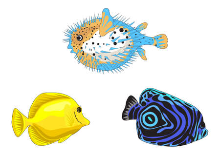 blowfish: Tropical fish illustrations isolated on white background