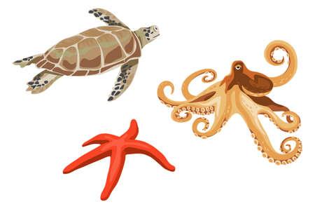 turtle isolated: Ilustraciones de tortuga, pulpo y estrellas de mar aislados en fondo blanco Vectores