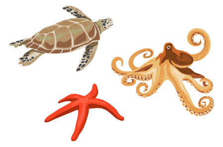 Turtle, octopus and starfish illustrations isolated on white background Illustration