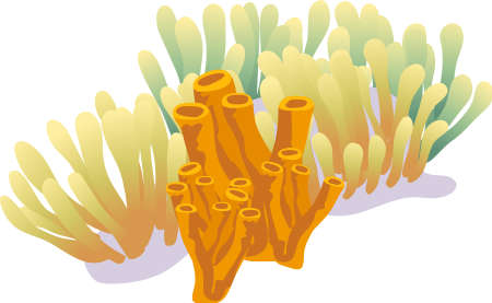 reefs: Coral reef illustration isolated on white background Illustration