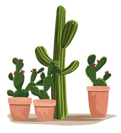 mexico cactus: Cactus Illustration