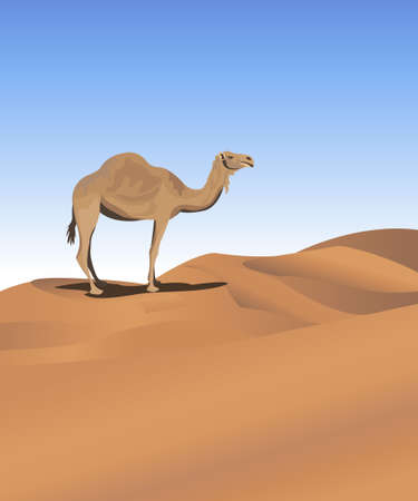 humped: Background illustration with a camel in the desert