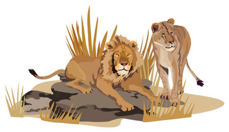 flora fauna: Illustration of African lions on savannah isolated on white