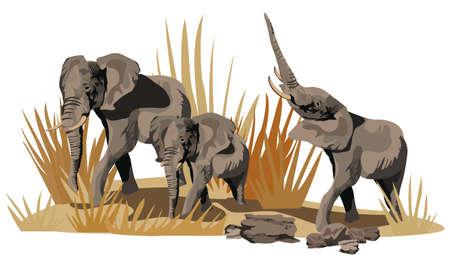 Illustratie van de Afrikaanse olifanten op de savanne op wit wordt geïsoleerd Vector Illustratie