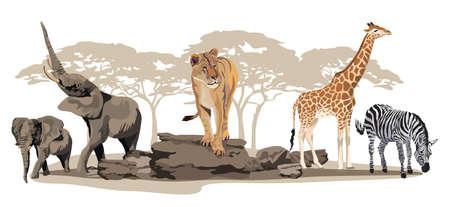Illustration of African animals on savannah isolated on white Ilustrace