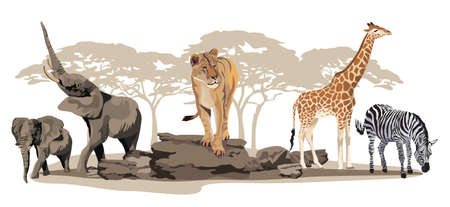 continente africano: Ilustración de los animales africanos de sabana, aislado en blanco Vectores