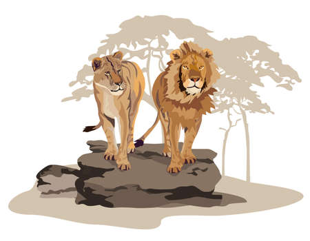 Illustration of African lions on savannah isolated on white
