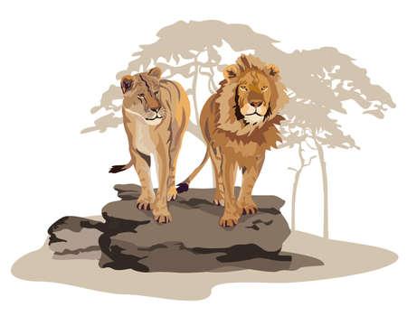 wildlife: Illustration of African lions on savannah isolated on white