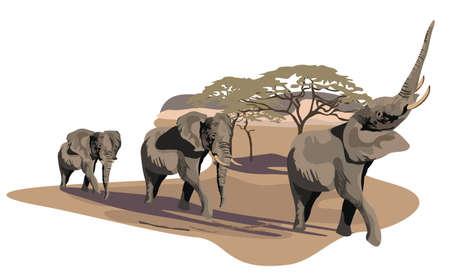 Ilustración de elefantes africanos en la sabana aislado en blanco