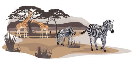 Illustration of zebras and giraffes on savannah Vector