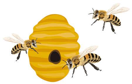 abeja: Ilustración de las abejas y su colmena, aislado en fondo blanco