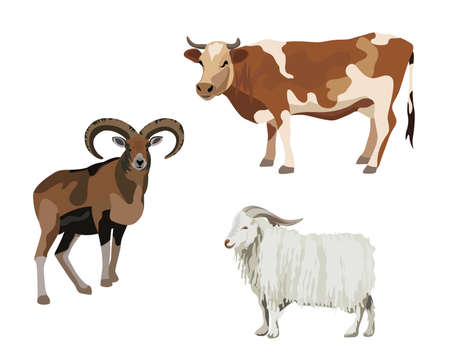 cow vector: Illustration of domestic animals, isolated on white background Illustration