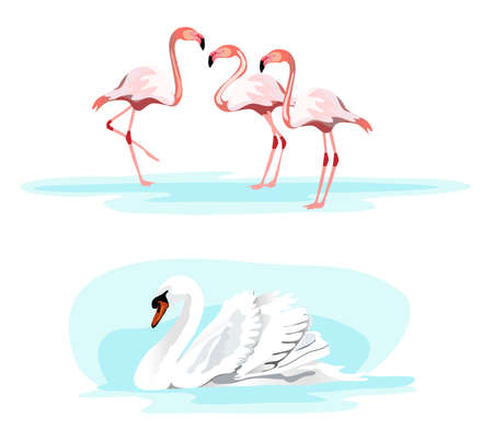 migrating birds: Illustrations of a swan and flamingos, isolated on white background
