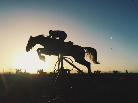 fence: Horse silhouette in sunset