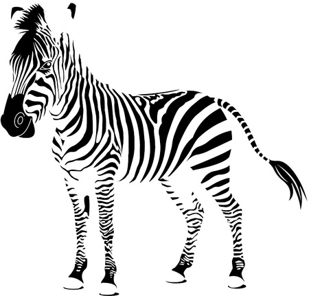 Isolated zebra silhouette texture detail Ilustrace