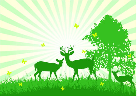 A beautiful scene of wildlife in nature Vector