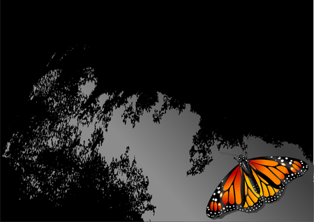 Image shows monochrome abstract graphic with colorful butterfly Ilustrace