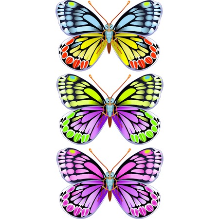 Three various colored vector flying butterflies Illustration