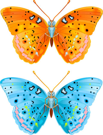 butterfly isolated: Two various colored vector flying butterflies