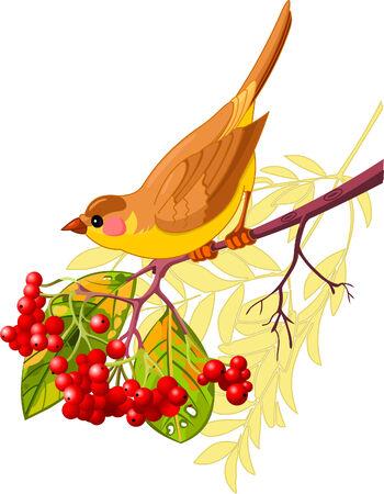 かわいい鳥の山の灰の枝に座っています。白い背景で隔離