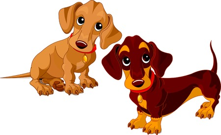 Two isolated dachshunds on the white background Stock Vector - 5628345