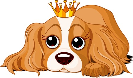cavalier: Cavalier King Charles Spaniel with crown