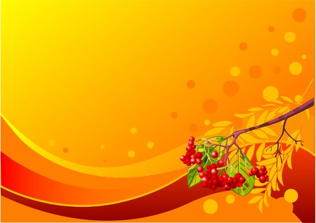 Vector background with mountain ash branch