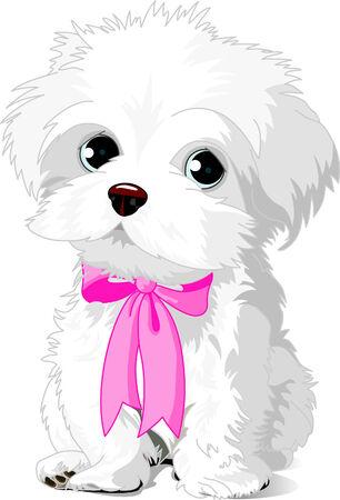 ピンクのリボンとポーズかわいい白い Havanese 子犬