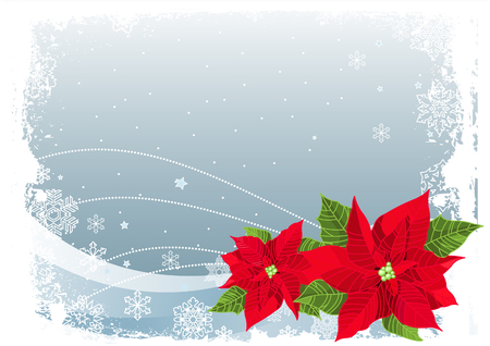 Christmas decoration poinsettia flower on Christmas snowing background