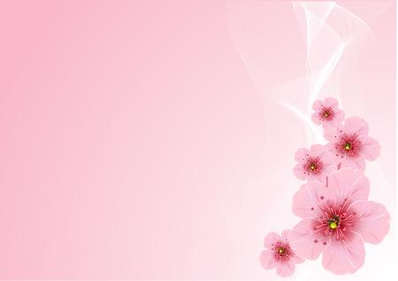 cerisier fleur: Arrangement de la fleur de cerisier, sur fond Rose Illustration