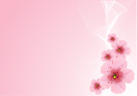 Cherry blossom arrangement, against pink background Vector