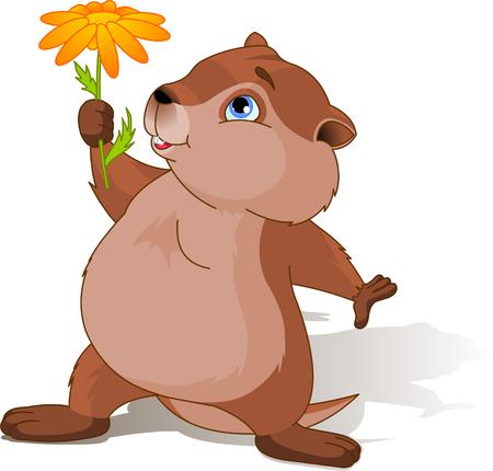 Ein Cartoon-Groundhog halten eine erste Frühlingsblume.