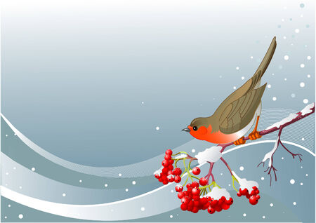 Vector winter background with mountain ash branch