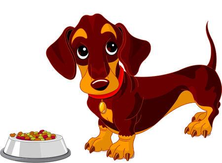 hocico: Dachshund lindo perro cerca de plato de comida para perros Vectores