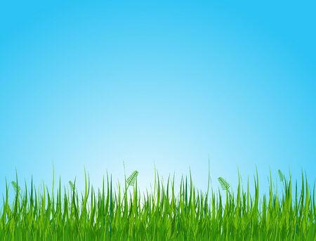 prato e cielo: Perfetta illustrazione del campo erboso estate