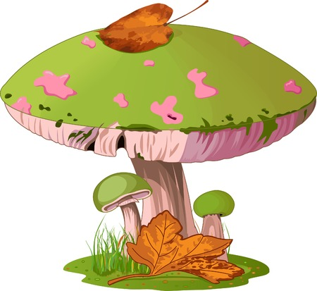Illustration  of Mushrooms in the grass.   向量圖像