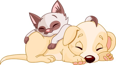 dog and cat: Cute Puppy and adorable kitten are sleeping
