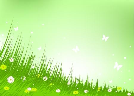 grassy field: Summer grassy field and butterflies background Illustration