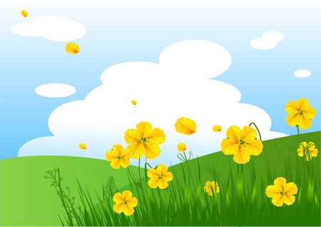 grassy field: Summer grassy field and flowers background