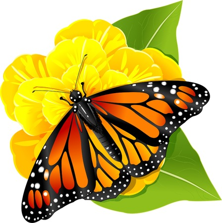 黄色の花のモナルカ蝶