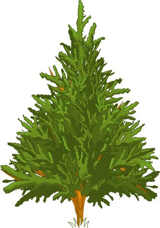 art painting: Green Pine tree for your design Illustration